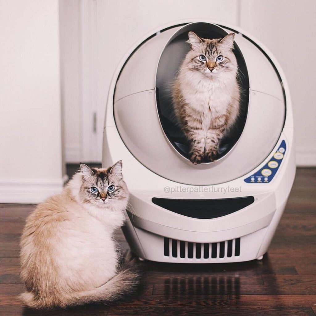 La Litière robot autonettoyante pour chat